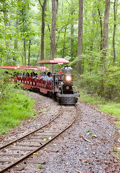 A small recreational train with passengers aboard moving through a wooded area