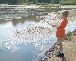 Photo of a boy fishing at a creek