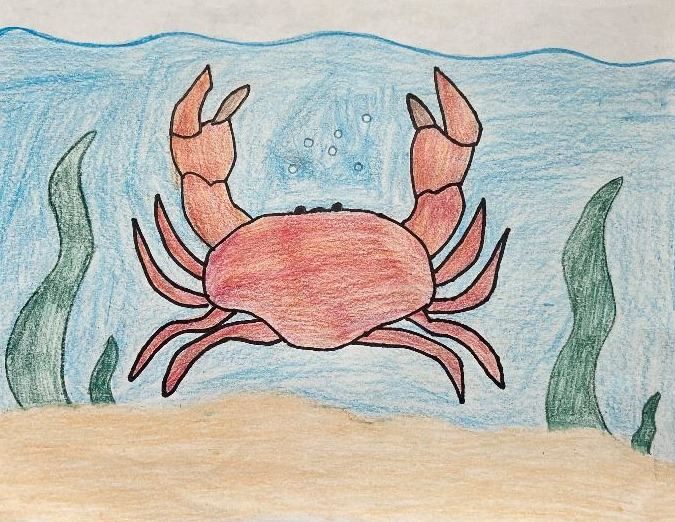 Alissa N. Hungry Crab Drawing